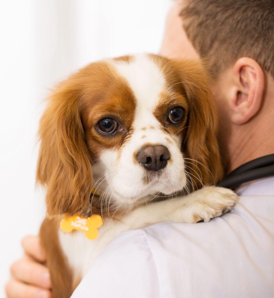 Dog on Shoulder