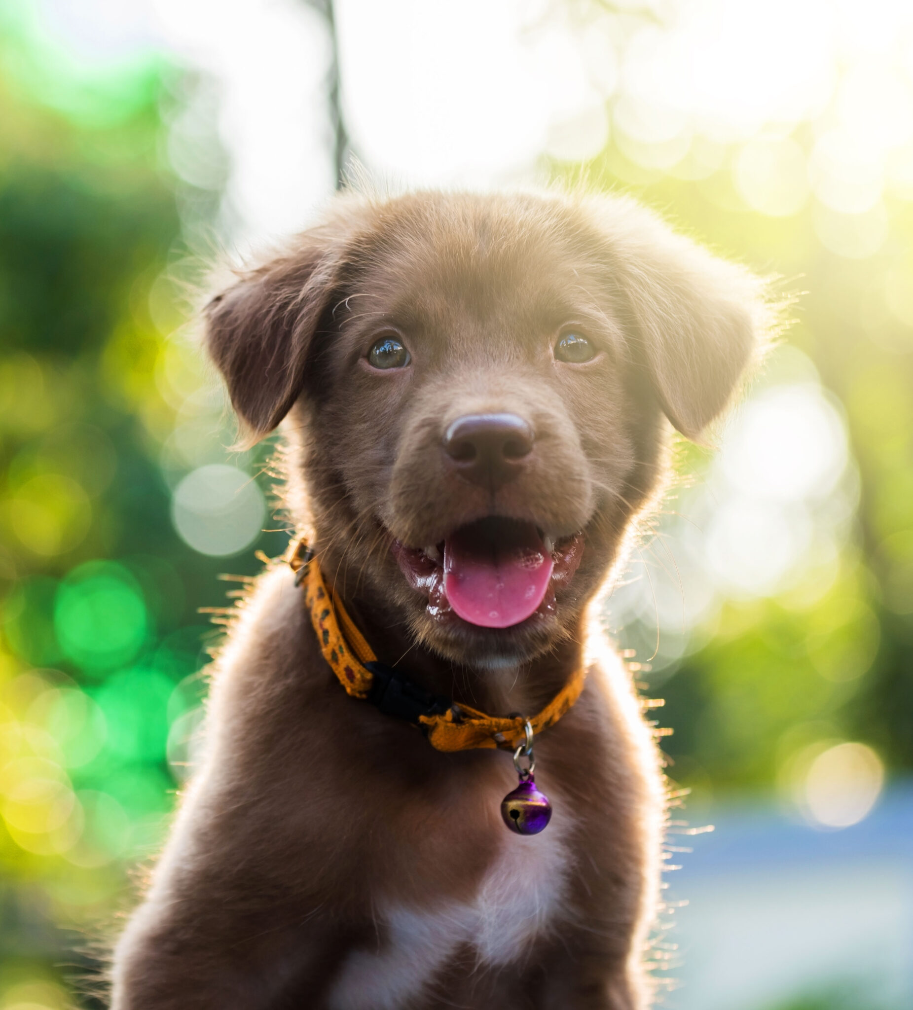 Puppy Outdoors