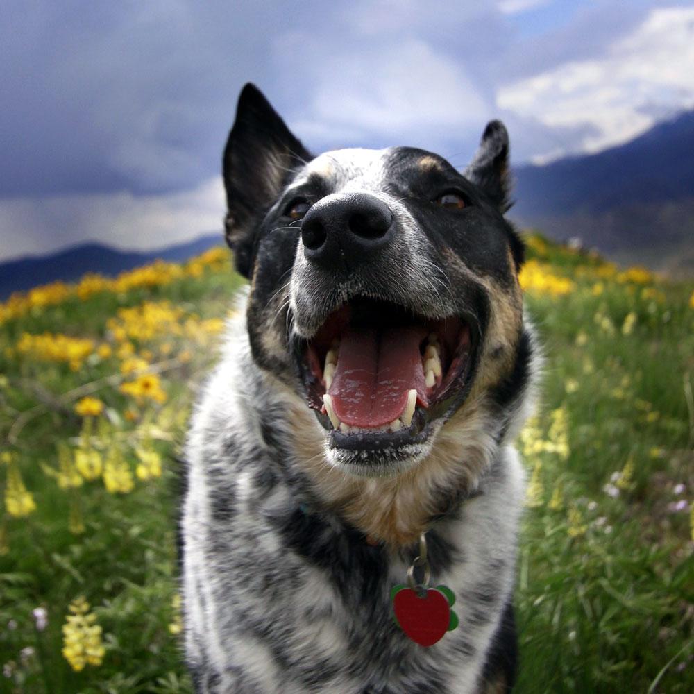 dripping-springs-texas-veterinary-dental-month