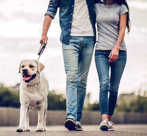 walk - Couple walking yellow lab on leash
